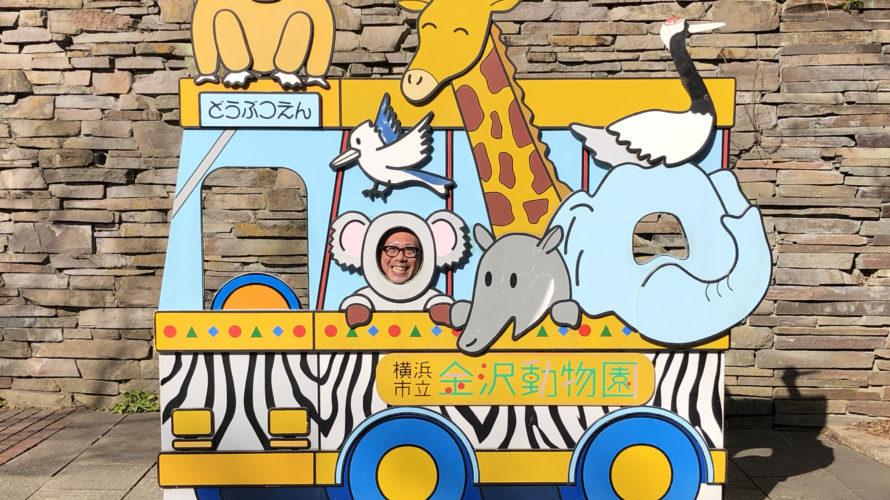 コアラが見れる横浜市立金沢動物園でバスに乗る動物たちに顔ハメ